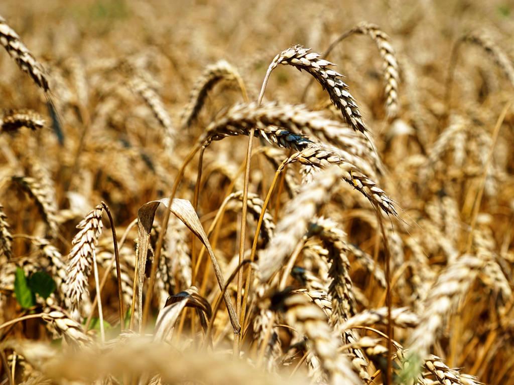 охлаждение зерна
