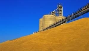 обработка зерна на элеваторах