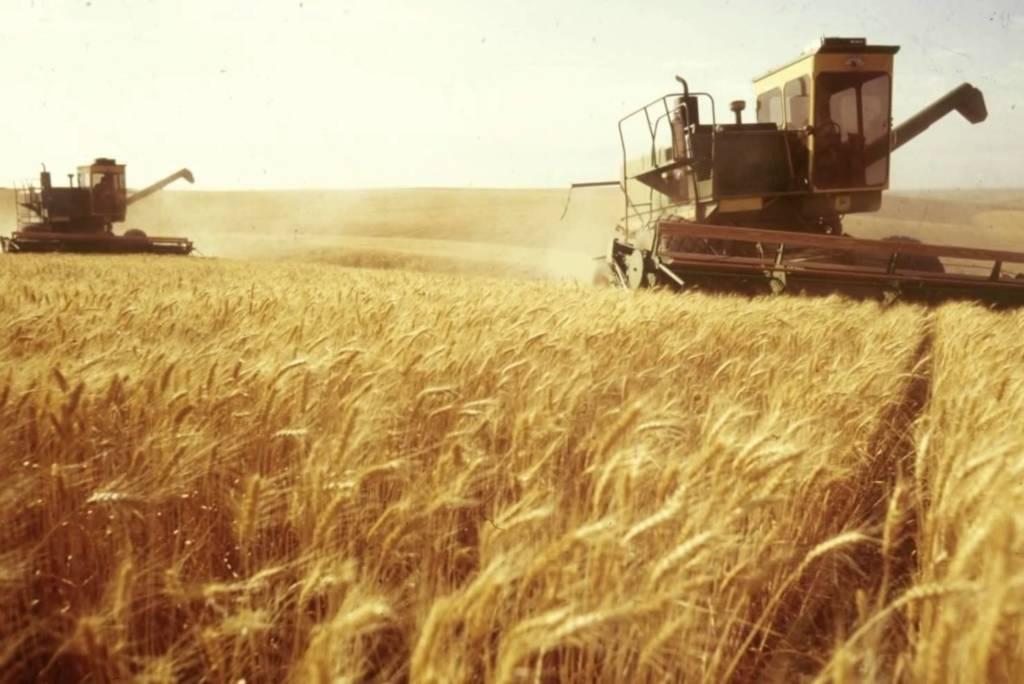 небулизация зерна