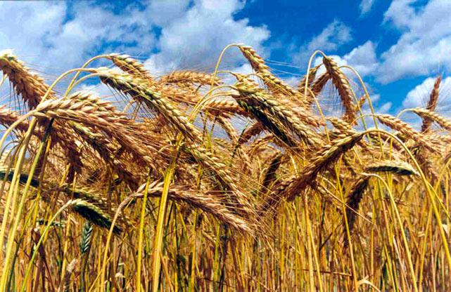 Типы обработки зерна