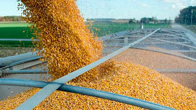 переработка зерна (сбор урожая)