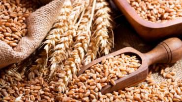 Як позбутися зернової молі