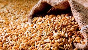 обработка зерна: небулизация или фумигация