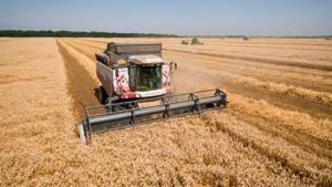 обработка пшеницы