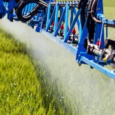 Які норми щодо вмісту хлорпірифосу у зернових культурах