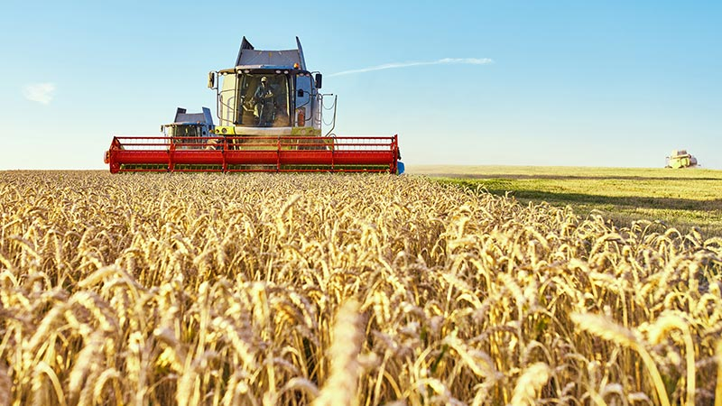 выращивание зерна