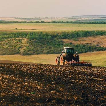 Етапи дозрівання пшениці