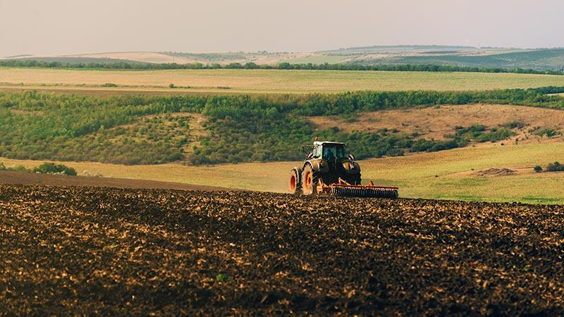 Этапы созревания пшеницы