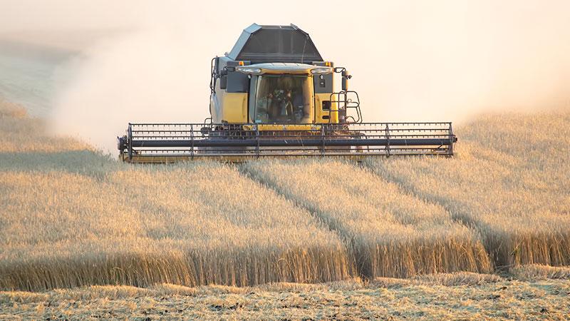 виды болезней пшеницы