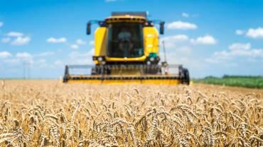 Самі врожайні сорти пшениці у світі