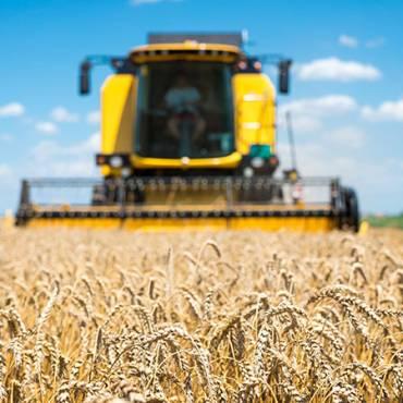Самые урожайные сорта пшеницы в мире